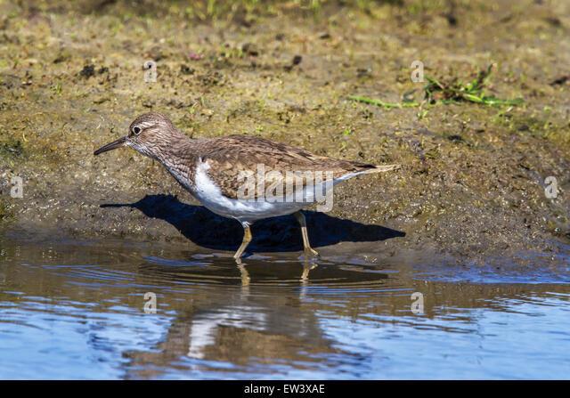 Salt Marsh Animals Stock Photos & Salt Marsh Animals Stock ...