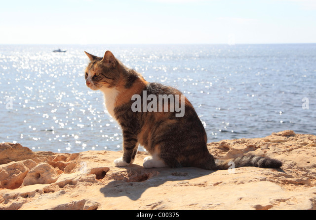 Image result for images of cats at sea
