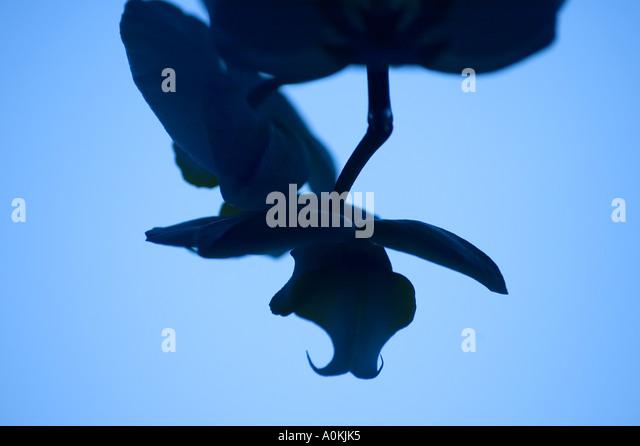 Phalaenopsis Orchid Room Stock Photos & Phalaenopsis ...