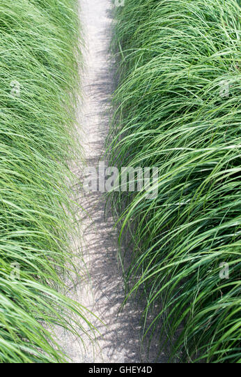 Herbaceous Perennial Grass Stock Photos Herbaceous