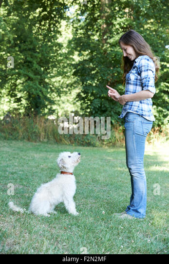 classification of dog owners Dog owners home » dog owners » overview overview you, your dog & parasites dogs are not just pets they are treated like members of the family.