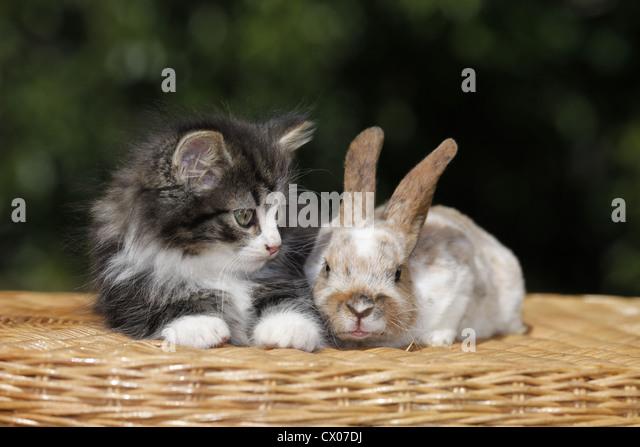 large pet cats