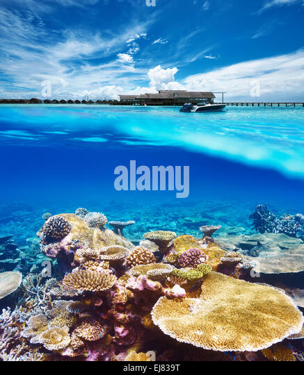 Reef Platform Stock Photos & Reef Platform Stock Images
