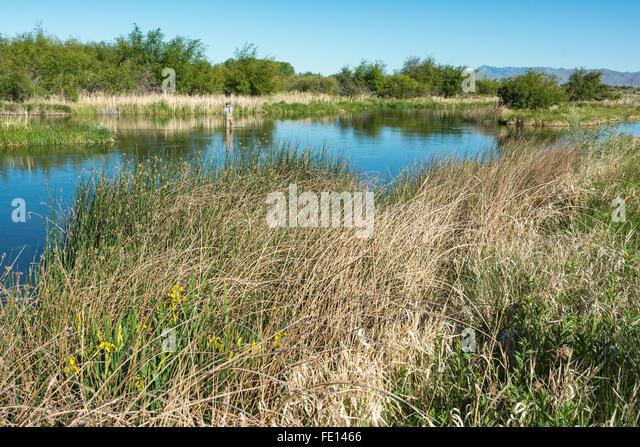 Silver creek preserve idaho stock photos silver creek for Silver creek idaho fishing