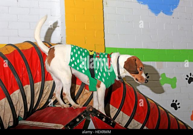 Dog Day Care Birmingham City Centre