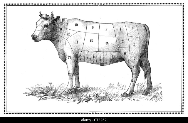 cuts of beef diagram stock photos  u0026 cuts of beef diagram