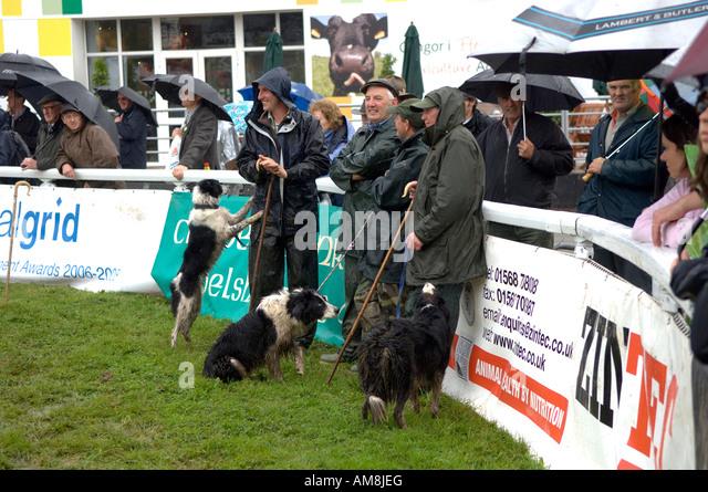 Kirkley Hall Dog Show