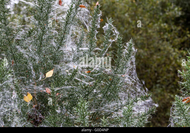 Spiders Webs Stock Photos Spiders Webs Stock Images Alamy