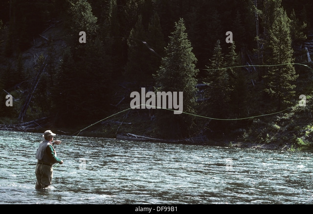 Fly fishing wyoming stock photos fly fishing wyoming for Yellowstone fly fishing