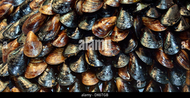 Appetizer stuffed mussels. Street vendor service mussels with a squirt ...
