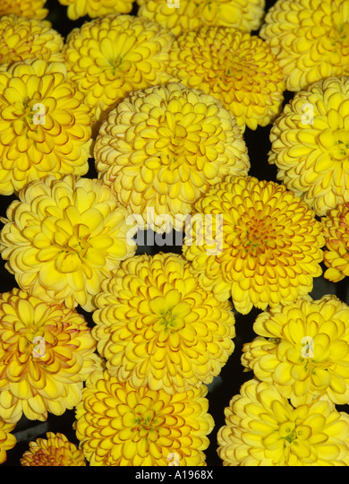 Frilled Stock Photos & Frilled Stock Images