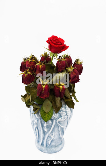 A Single Red Rose Amongst Bouquet Of Dead Ones