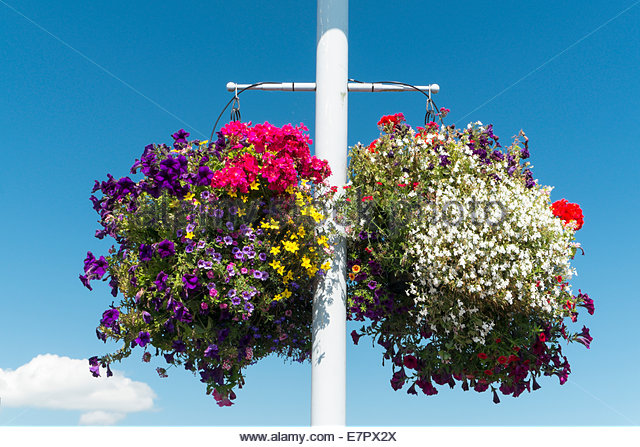 Hanging Flower Baskets Vancouver Wa : Mpsc stock photos images alamy