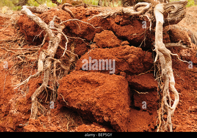 fertile soil volcano - photo #45