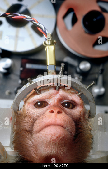 using monkeys in medical experiments Baboons used in 'frankenstein-like' medical experiments by natalie o'brien media has uncovered evidence during a six-month investigation about what has been dubbed frankenstein-like surgical experiments undertaken on primates using taxpayer funds replay.
