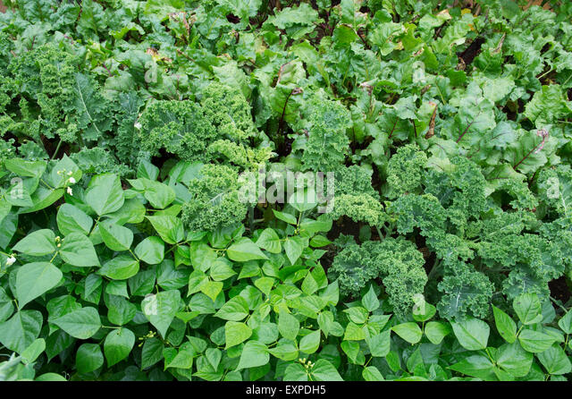 Abundant summer vegetables stock photos abundant summer for Summer vegetable garden
