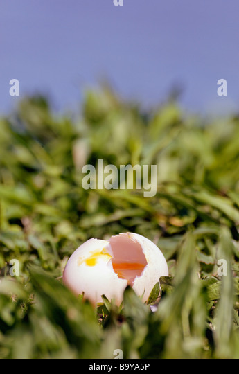 Canada Goose jackets outlet store - Goose Egg Stock Photos & Goose Egg Stock Images - Alamy