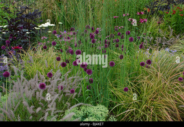 Border with grasses stock photos border with grasses for Border grasses for landscaping