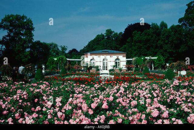 palm garden frankfurt germany rose festival