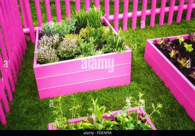 Raised beds garden lettuce stock photos raised beds for Vegetable herb garden design
