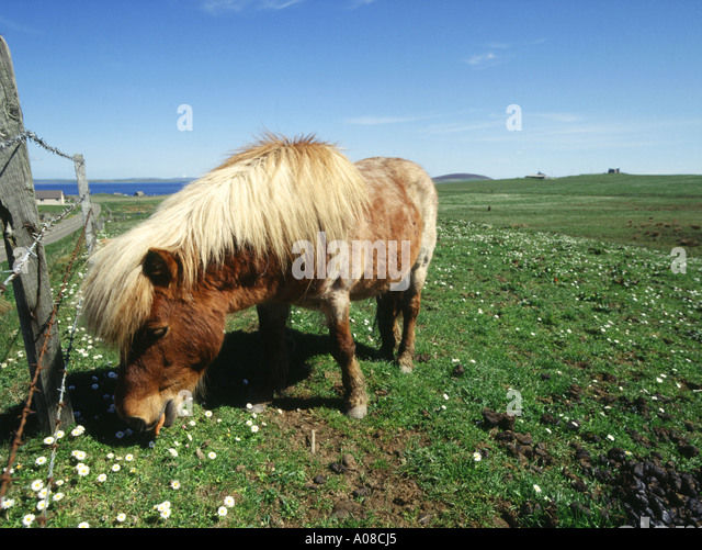 Horse and country orkney