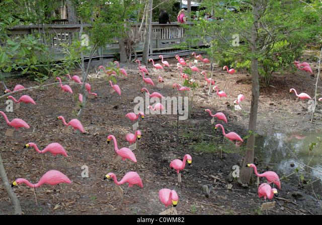 Orlando Florida Sanford Central Florida Zoo U0026 And Botanical Gardens Pink  Plastic Flamingos   Stock Image