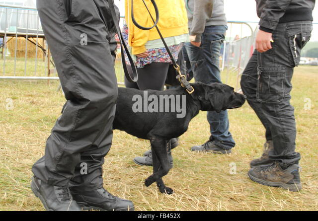 how to get drugs into festival with sniffer dogs