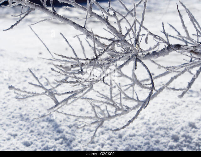 Branches ground stock photos