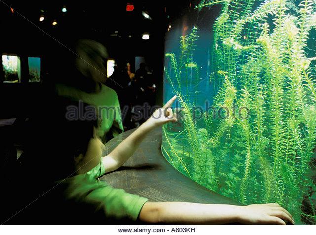 North America, USA, Oklahoma, Jenks. Aquarium people at exhibits ...