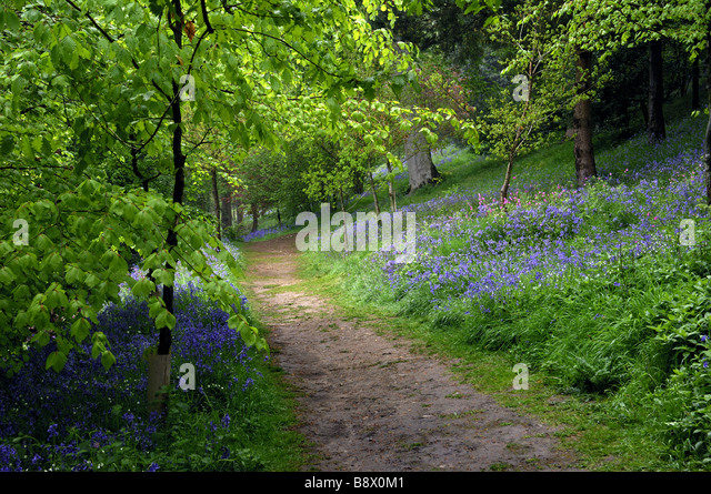 Prepossessing Emmetts Garden Stock Photos  Emmetts Garden Stock Images  Alamy With Fair Pathway Through The Bluebells And Woodland At Emmetts Garden Sevenoaks Kent   Stock Image With Comely Browns Restaurant Covent Garden Also Garden Rotavator In Addition Childs Gardening Set And Used Garden Shed As Well As Bulbs Garden Additionally Olive Garden Orlando Menu From Alamycom With   Fair Emmetts Garden Stock Photos  Emmetts Garden Stock Images  Alamy With Comely Pathway Through The Bluebells And Woodland At Emmetts Garden Sevenoaks Kent   Stock Image And Prepossessing Browns Restaurant Covent Garden Also Garden Rotavator In Addition Childs Gardening Set From Alamycom