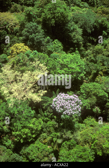 Aerial of rainforest canopy with tree in bloom Amazon region Para Brazil - Stock Image & Biome Rainforest Stock Photos u0026 Biome Rainforest Stock Images - Alamy