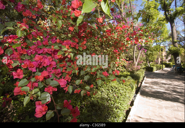 Aquascalientes stock photos aquascalientes stock images for Jardin villa ale aguascalientes