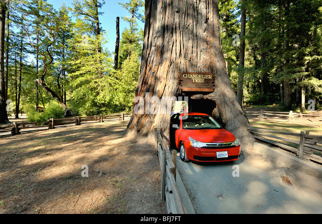 Chandelier Tree Stock Photos & Chandelier Tree Stock Images - Alamy