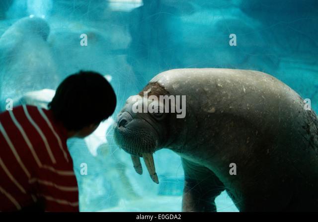 Image Gallery Largest Aquarium In Spain