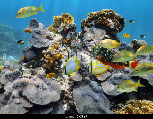 Belize reef stock photos belize reef stock images alamy for Caribbean reef fish