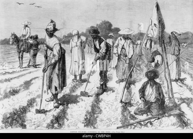 tobacco cotton slavery frq 2/3rds of the time of slaves on southern cotton plantations was spent on activities which had nothing to do with the cotton crop the slaves on virginia tobacco farms had even easier lives in terms of the intensity of slavery, sugar  rice  coffee  cotton  tobacco.