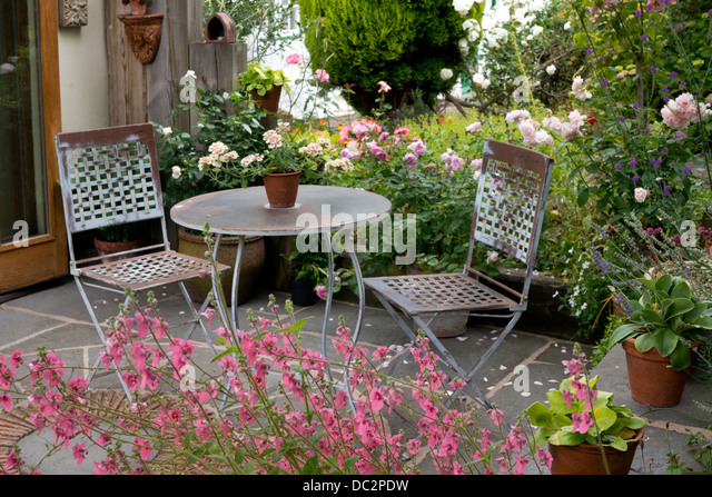 typical english garden plants flowers stock photos