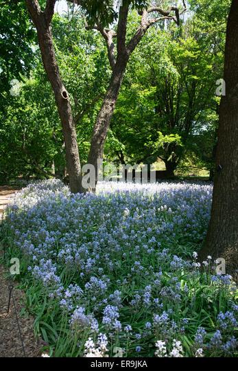 Brooklyn Botanical Gardens Prospect Park Stock Photos