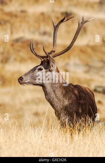 how to sell deer antlers