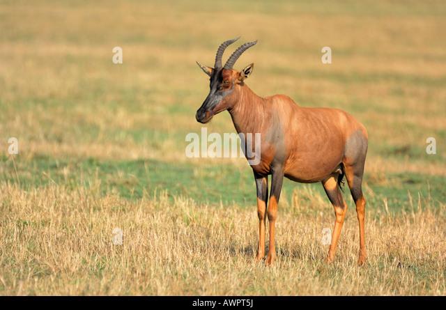 Lunatus Stock Photos & Lunatus Stock Images  Alamy