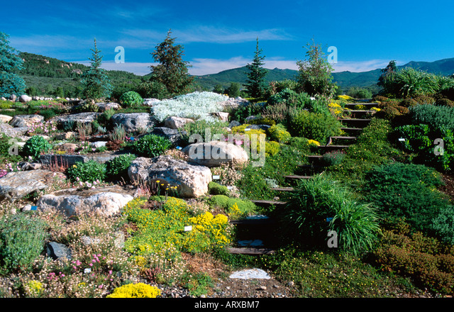 Garden Steamboat Colorado Flower Stock Photos Garden Steamboat Colorado Flower Stock Images