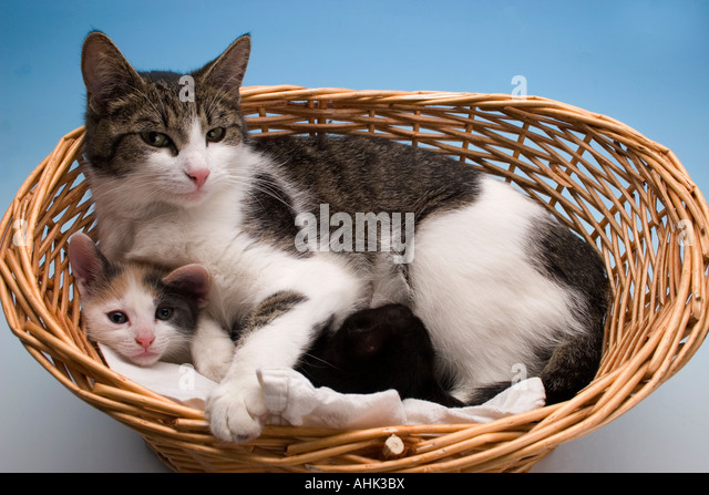 Kittens Playing In Cat Basket Stock Photos & Kittens ...