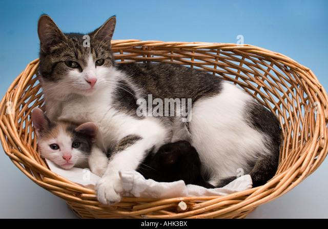 Kittens Playing In Cat Basket Stock Photos & Kittens ...