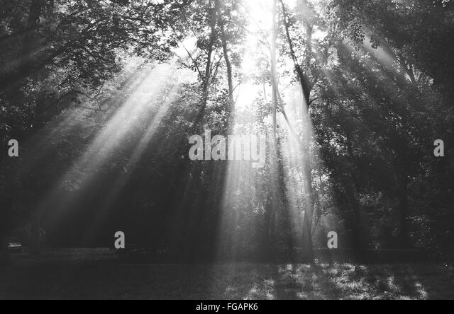 sunlight through trees black - photo #4