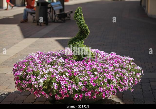 Round Flower Bed : Round Flower Bed Stock Photos & Round Flower Bed Stock Images - Alamy