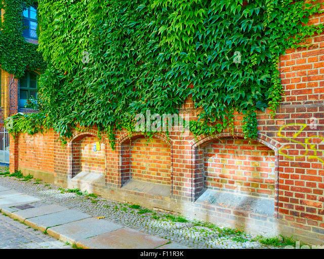 Plant Green Grow Building Wall Stock Photos Plant Green Grow Building Wall Stock Images Alamy