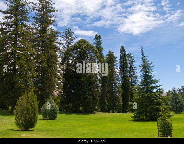 Adelaide botanic gardens stock photos adelaide botanic for Garden trees adelaide