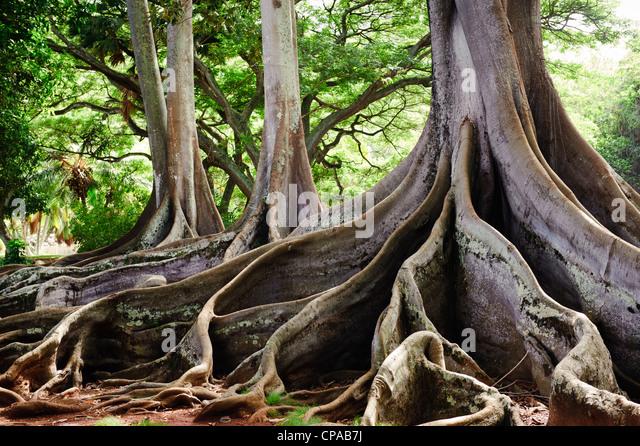 Allerton Garden Kauai Stock Photos Allerton Garden Kauai Stock