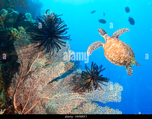 nature coral underwater landscape - photo #26