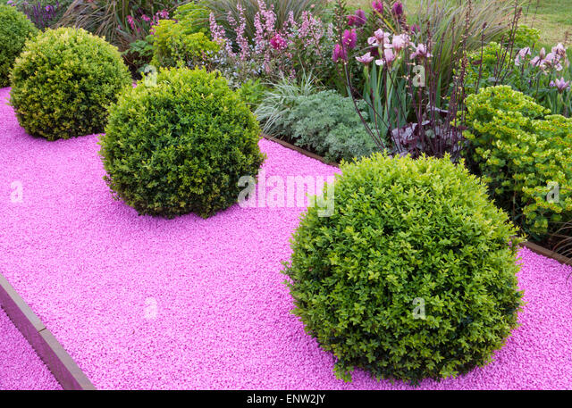 Buxus Sempervirens Garden Uk Stock Photos Buxus Sempervirens